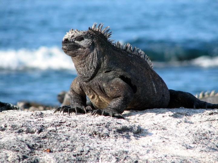 Galapagos_Islands